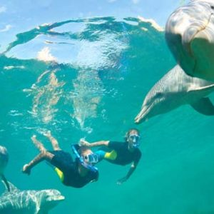 excursions-to-swim-with-dolphins.jpg